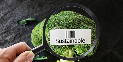 Sustainability Solutions in the Food And Nutrition Industry